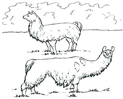 400x322 Alpaca Coloring Pages Coloring Pages Coloring Pages Coloring Trend