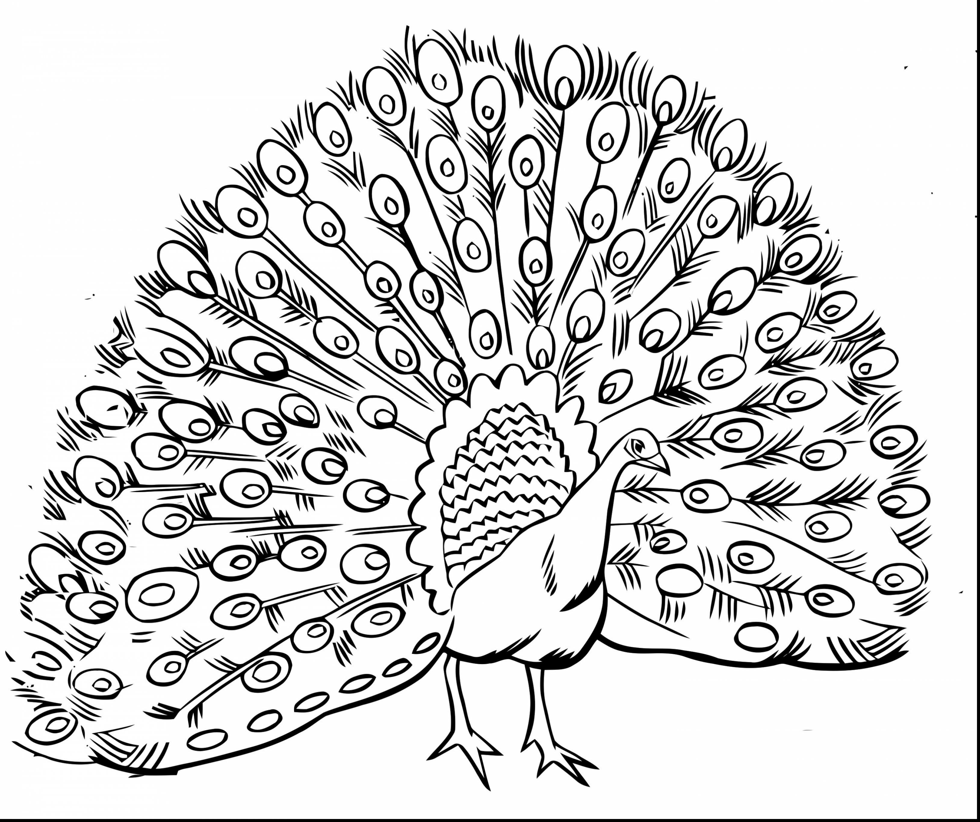 3256x2733 Astounding Printable Intricate Adult Coloring Pages With Amazing