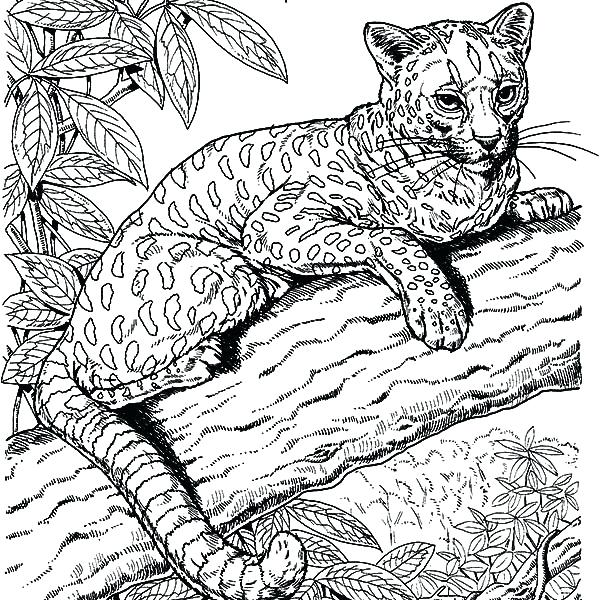 600x600 Amazing Coloring Pages Cool Animal Coloring Pages Amazing Coloring