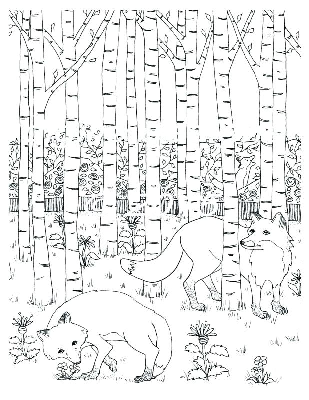 618x800 Rain Forest Coloring Pages Animals Coloring Page Coloring Pages