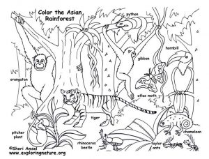 300x228 Amazing Design Rainforest Coloring Pages Stunning Inspiration