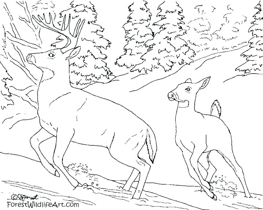 878x702 Rainforest Animal Coloring Pages Printable Coloring Pages