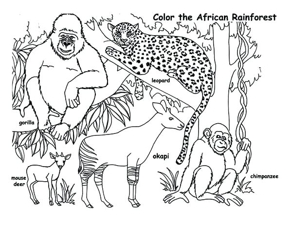 600x464 Rainforest Animals Coloring Pages Animals Coloring Page Amazon