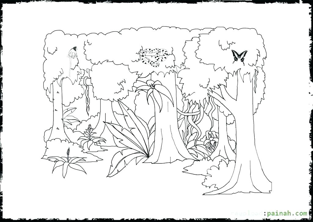 1024x728 Rainforest Animals Coloring Pages Free Printable A Animal Coloring