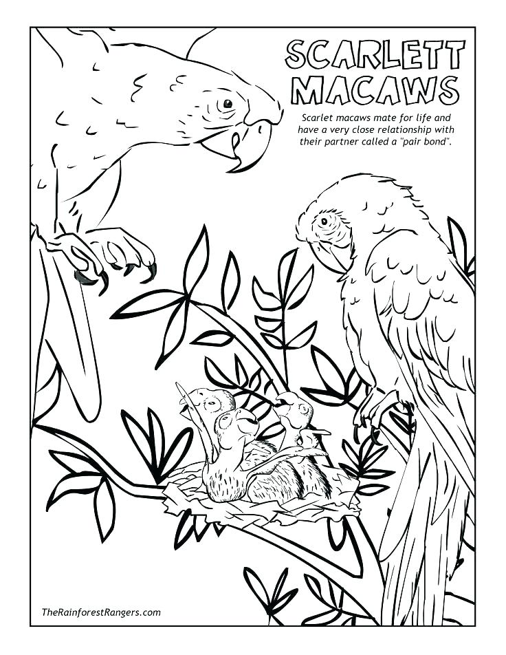 736x952 Rainforest Coloring Page Rain Forest Coloring Pages Tropical