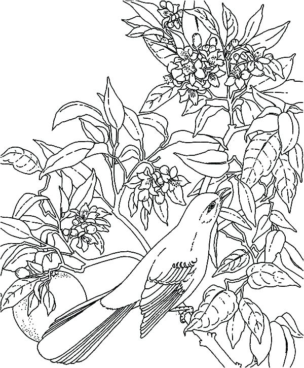 600x725 Rainforest Coloring Pages Tropical Coloring Page Tropical