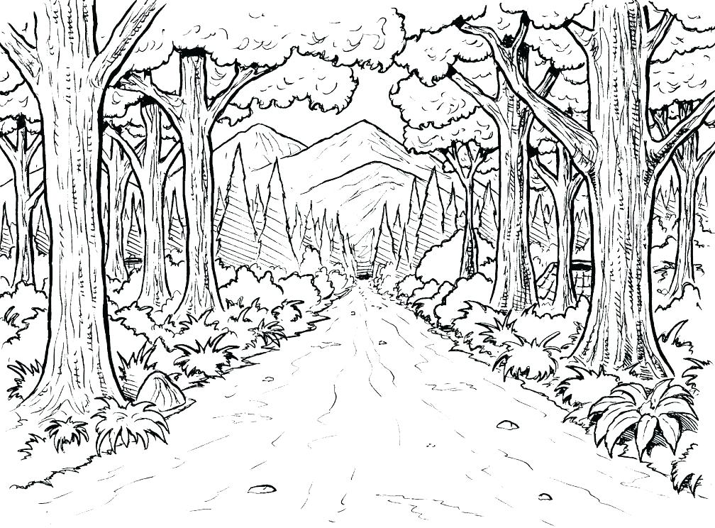 1008x744 Amazon Rainforest Animals Coloring Pages Free Colouring Amazing