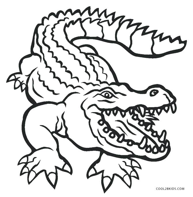 670x685 Alligator Coloring Sheet Alligar American Alligator Coloring Sheet