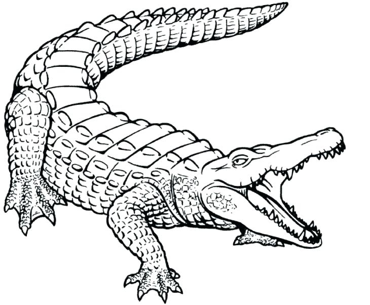 730x602 Alligator Coloring Sheets Alligator Coloring Sheets American