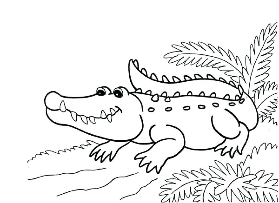 960x699 American Alligator Coloring Page Color Bros