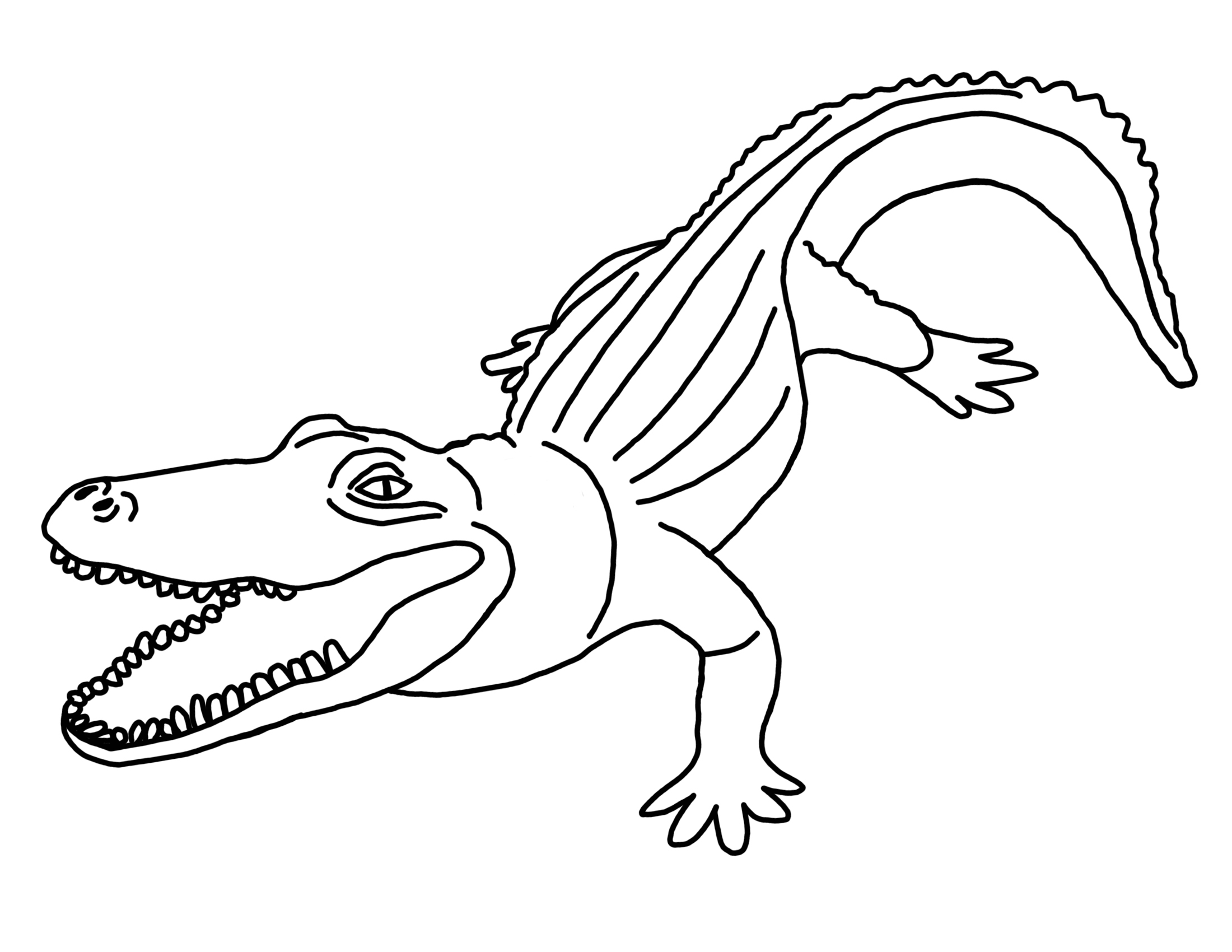 2200x1700 American Alligator Or Common Coloring Page Pages