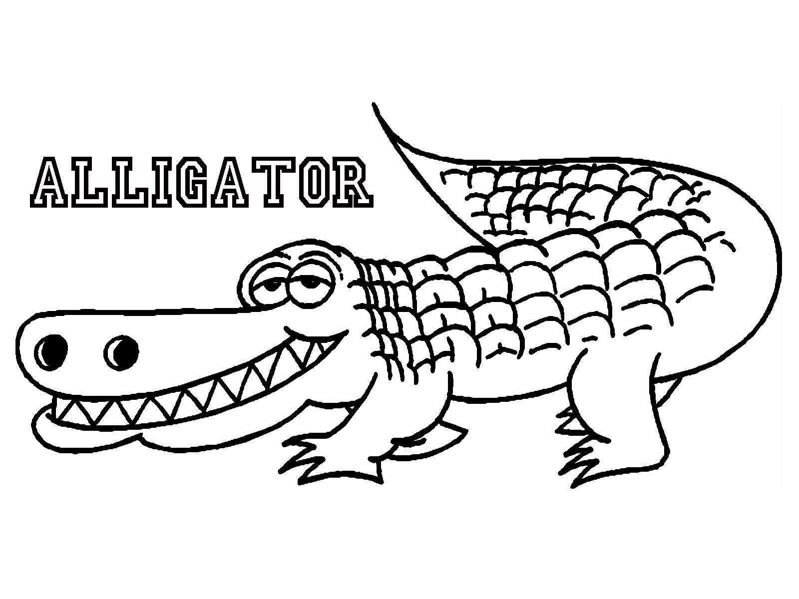 1600x1200 Latest American Alligator Coloring Page Drawin