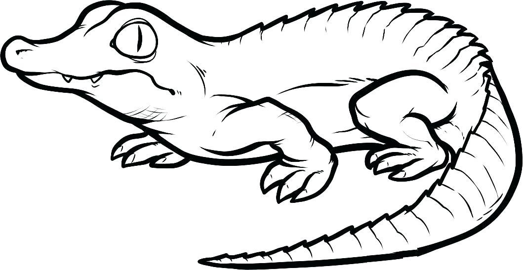 1059x547 Alligator Coloring Page Alligator Coloring Page Realistic