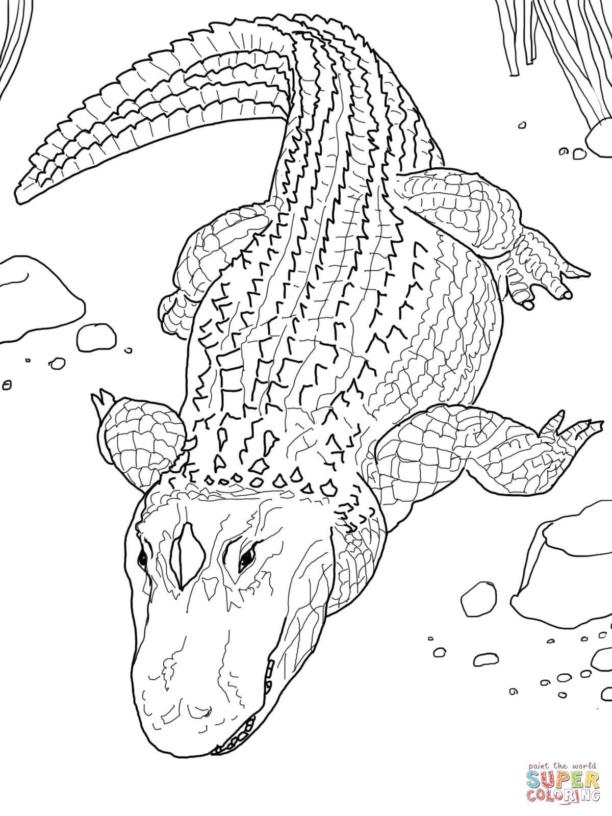 1200x1600 American Alligator Or Common Alligator Coloring Page