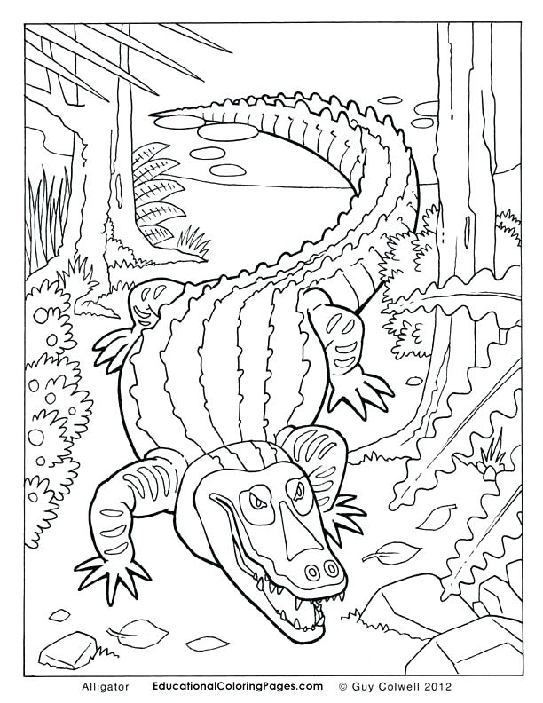 612x792 Alligator Coloring Page Alligator Coloring Pages Free Coloring