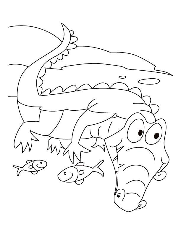 612x792 Alligator Coloring Page Alligator Motto Live N Let Live Coloring