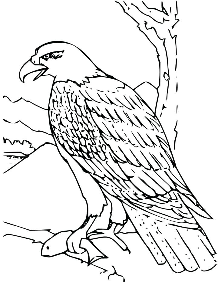 720x932 Bald Eagle Coloring Pages Bald Eagle With Smooth Feather Coloring