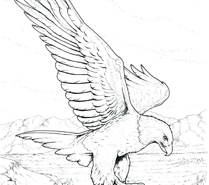 678x600 Bald Eagle Coloring Pages Fresh Bald Eagle Coloring Page Fee Head