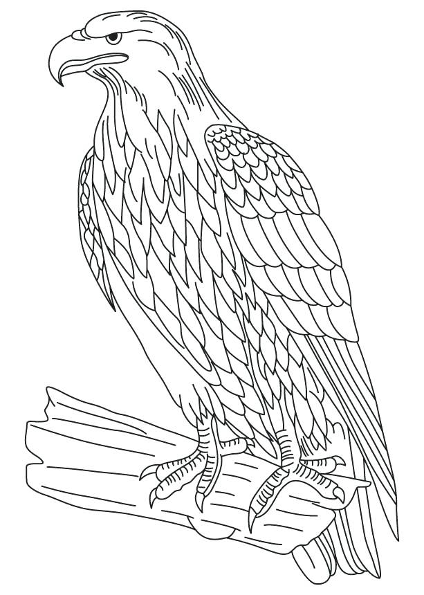 613x860 Bald Eagle Pictures To Color Wedge Tailed Eagle Colouring Pages