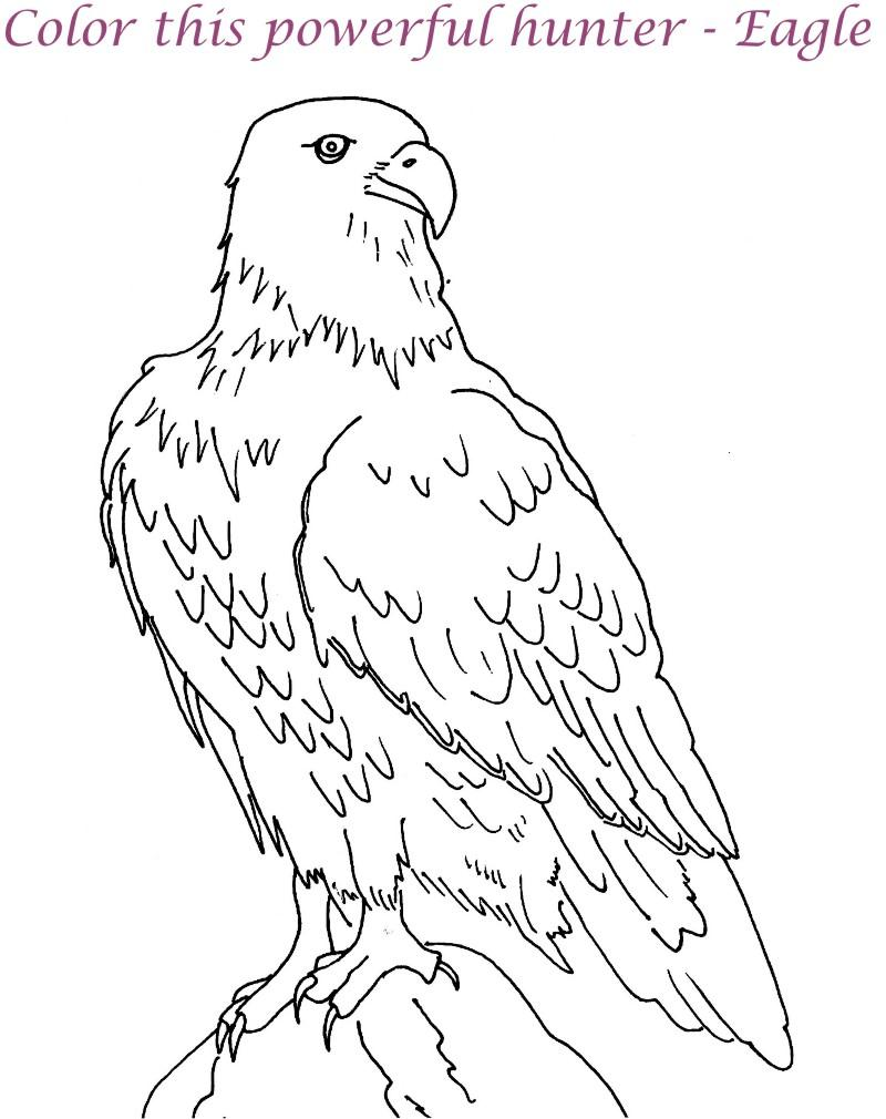 800x1010 Best Photos Of Eagle Print Out American Bald Eagle Coloring Page