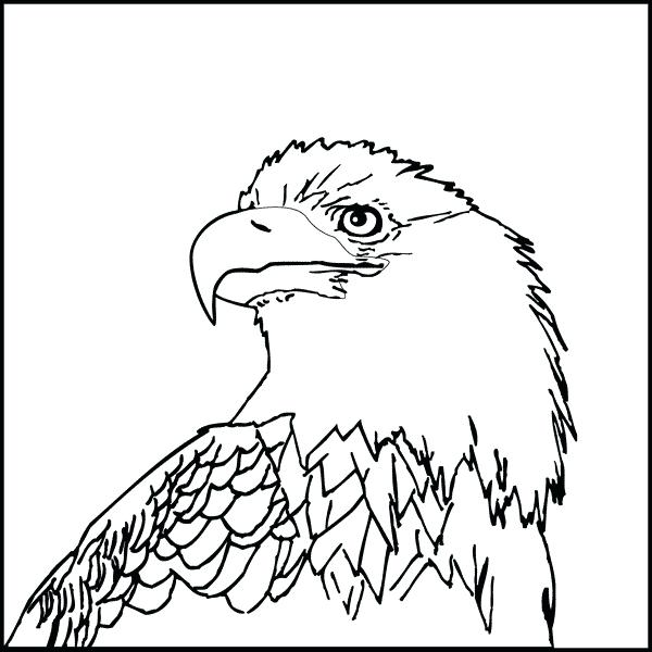 600x600 Coloring Page An Eagle Bald Eagle Coloring Page Fresh Rules