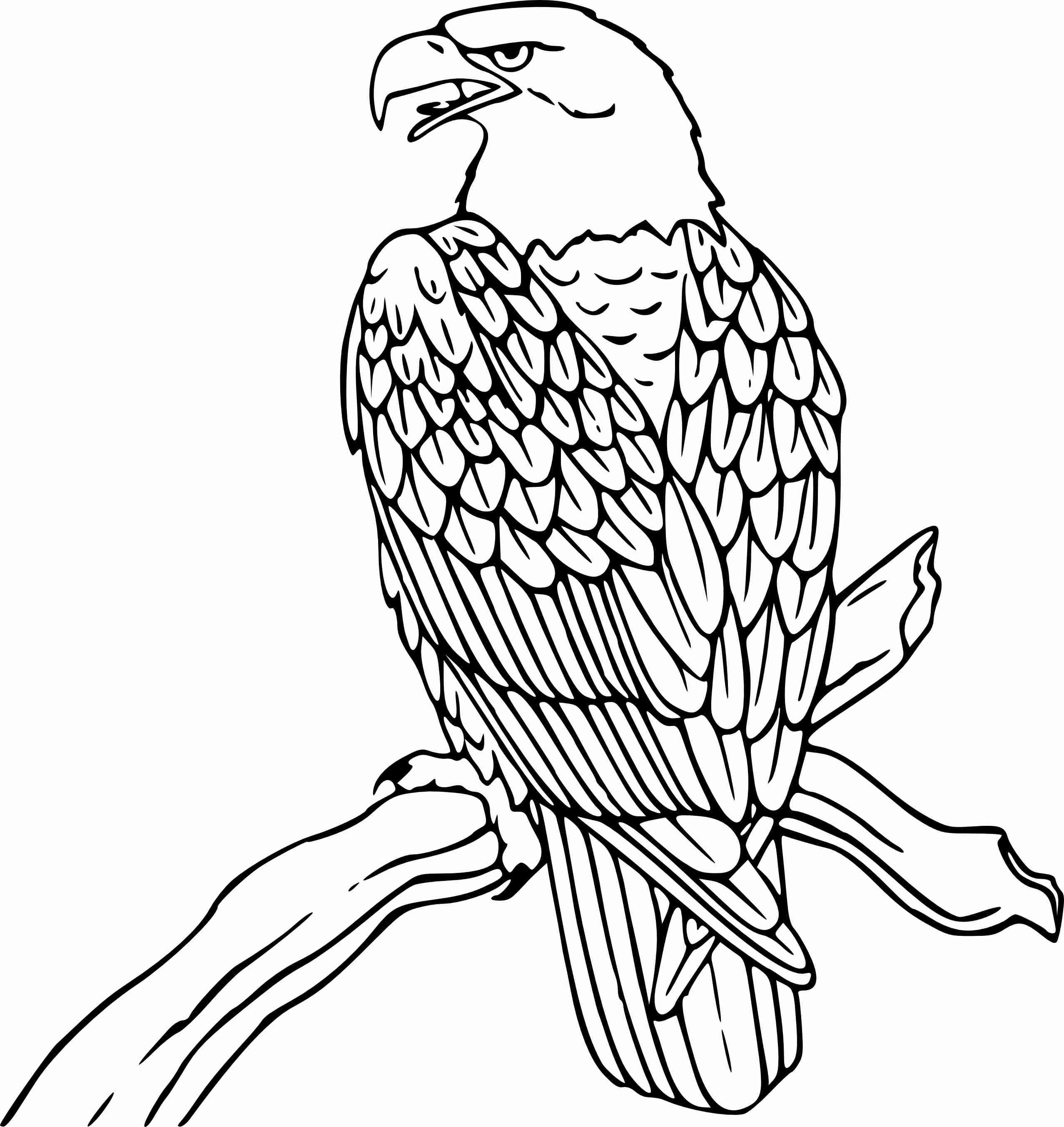 2555x2706 Coloring Pages Bald Eagle Page Soaring Here Home Endearing