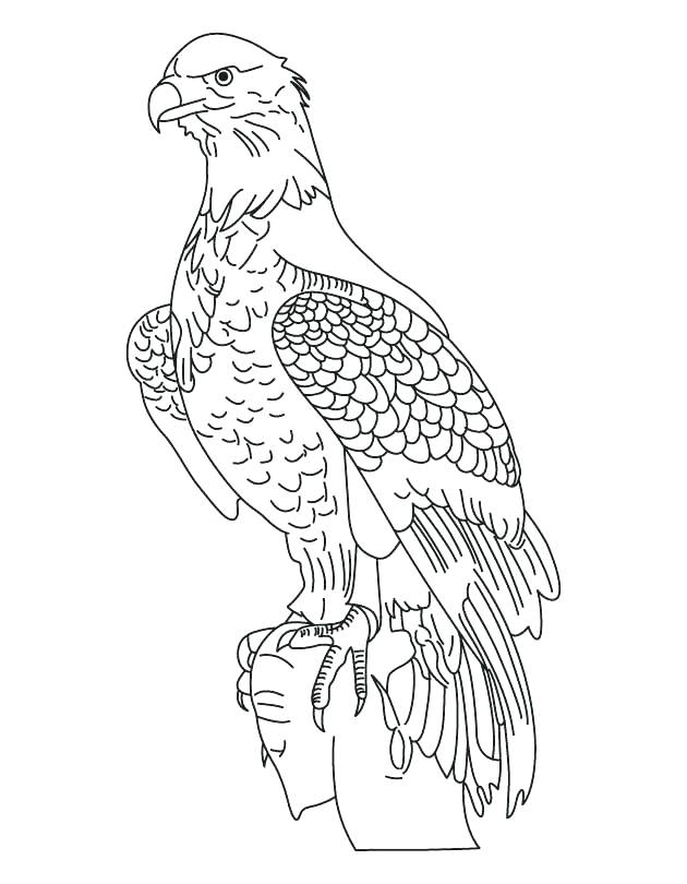 630x810 Eagle Color Page Fresh Bald Eagle Coloring Pages Online National