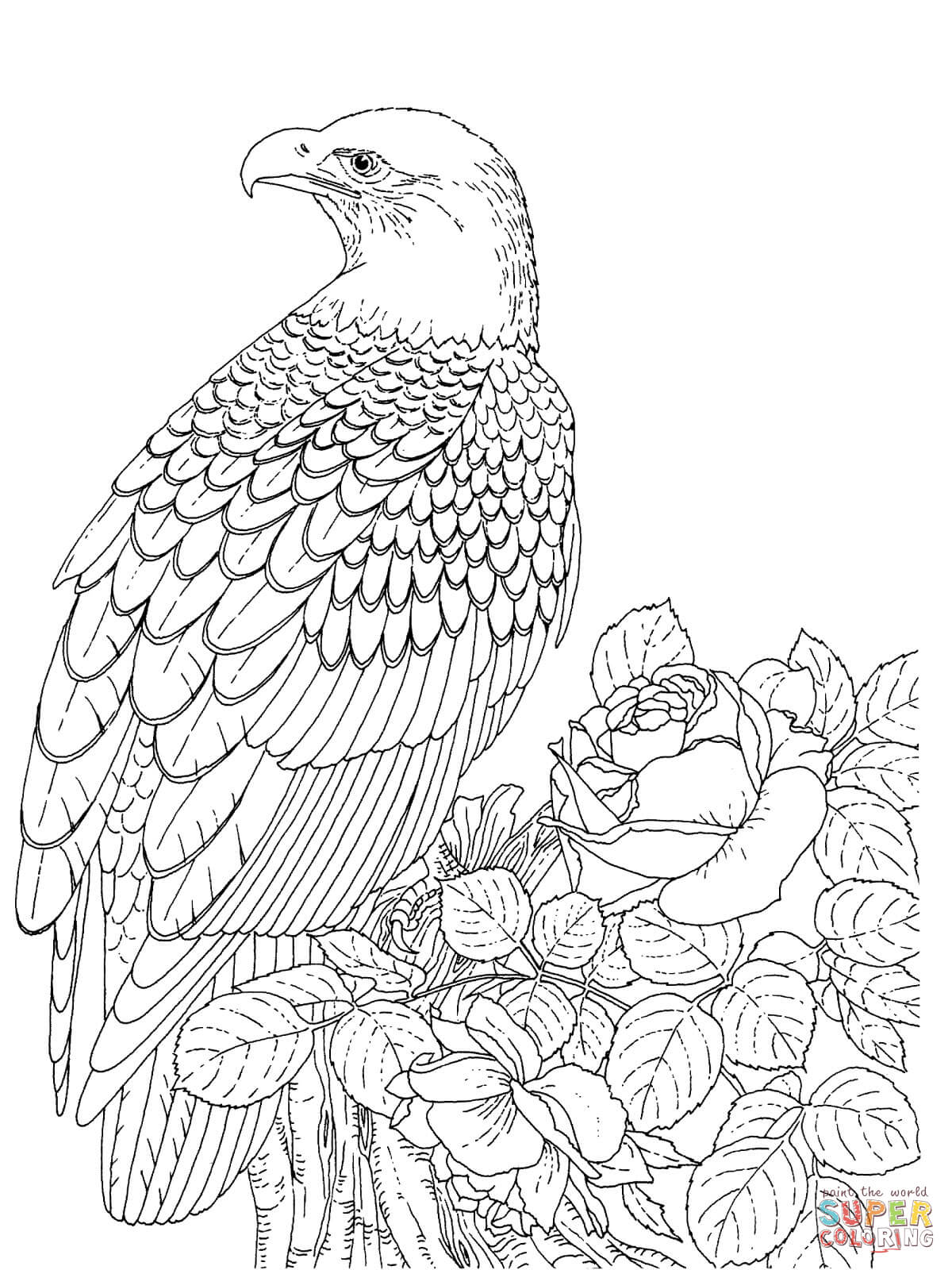 1200x1600 Realistic Bald Eagle Coloring Page Free Printable Coloring Pages