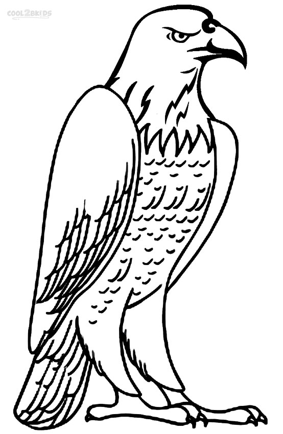 554x850 Bald Eagle Coloring Page Printable