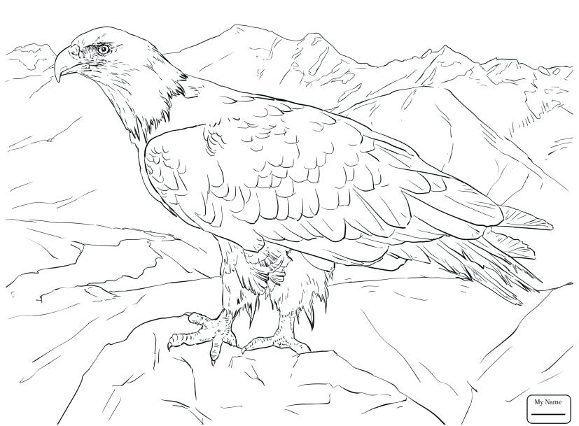 827x609 Bald Eagle Coloring Pages Bald Eagle Coloring Page Footage Birds