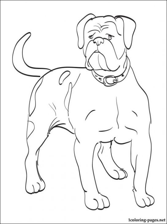 American Bulldog Coloring Pages At GetDrawings Free Download