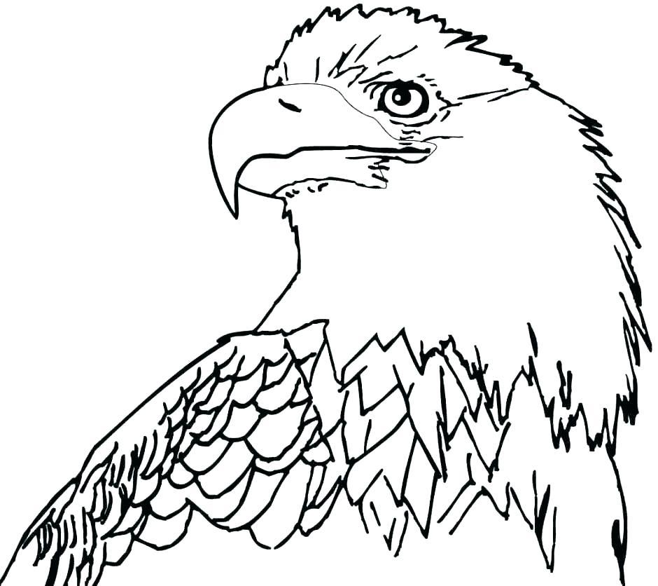 940x836 Bald Eagle Pictures To Color Bald Eagle Coloring Pages Eagle Color