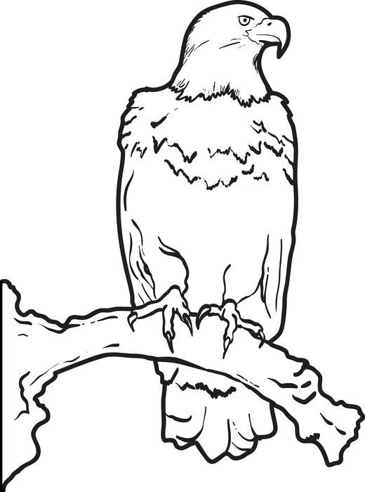 520x700 Eagle Color Page Bald Eagle Coloring Pages Eagle Color Page Eagle