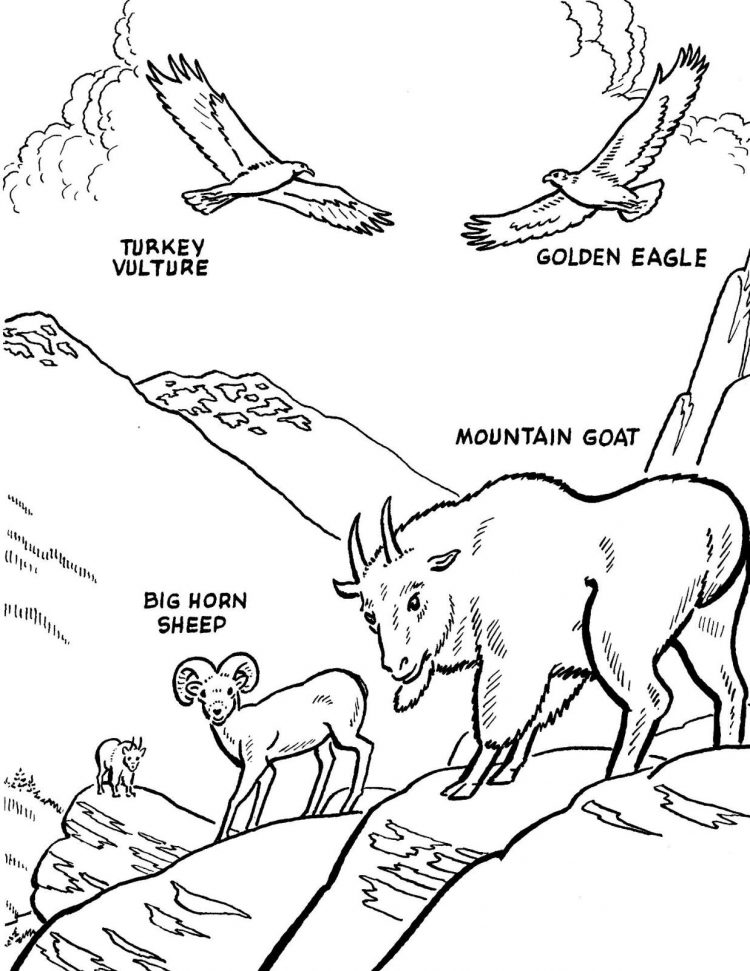 750x971 Coloring North America Coloring Page Also Birds Of North America