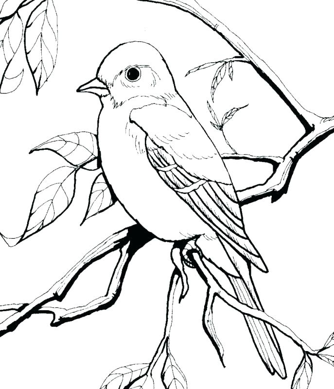 687x800 Robin Coloring Page This Is Robin Coloring Page Pictures Robin