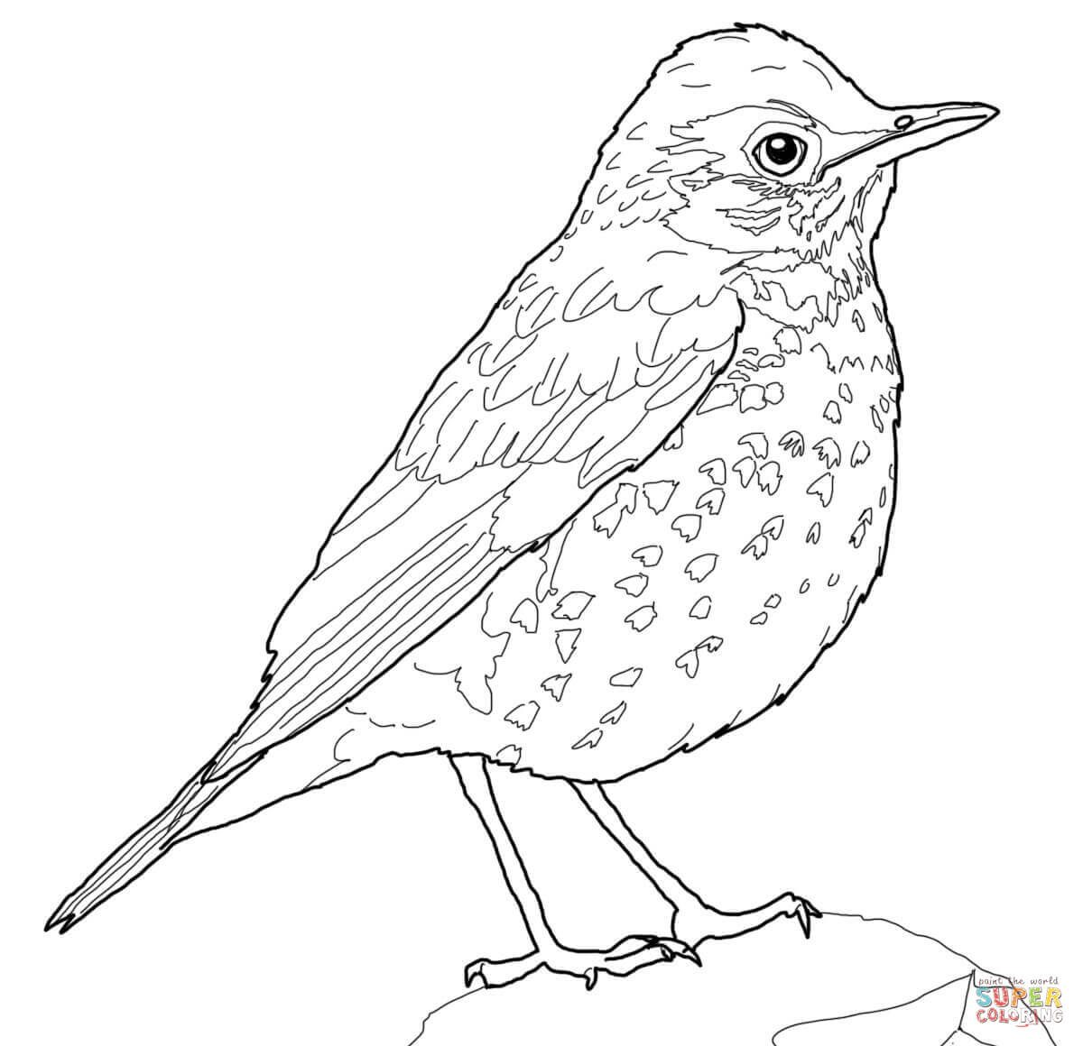 American Robin Coloring Page at GetDrawings   Free download