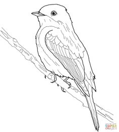 236x262 American Robin Coloring Page Robins Category Select