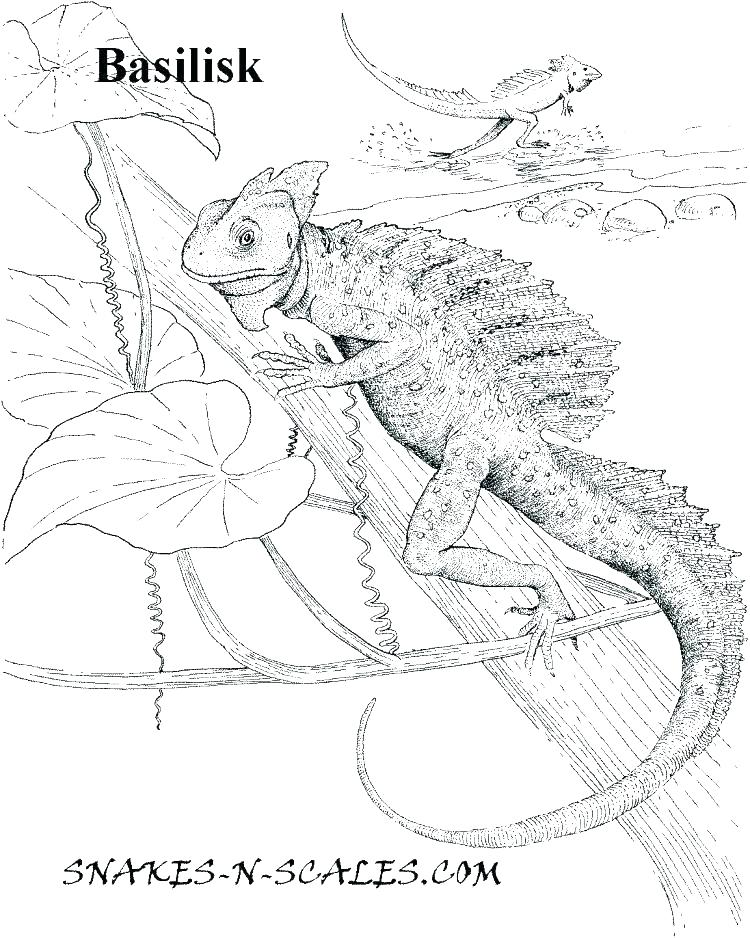 750x938 Fresh Reptile Coloring Pages For Reptile Coloring Pages For Luxury