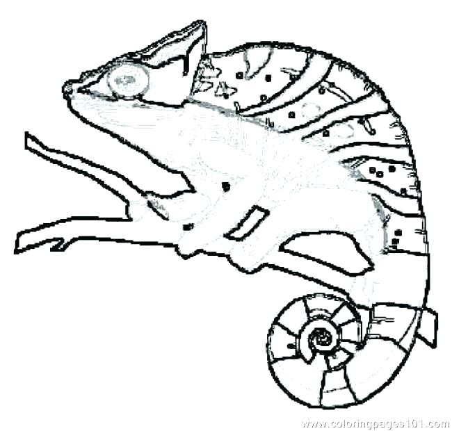 650x620 Reptile Coloring Pages Amphibian Coloring Pages Reptile Coloring