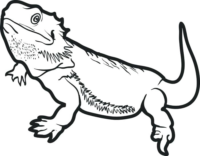 700x545 Reptile Coloring Sheets Amphibian Coloring Pages Coloring Page
