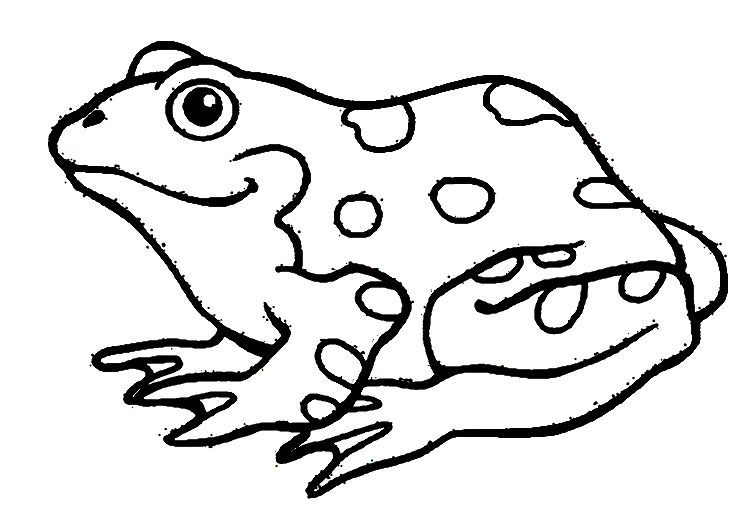 742x507 Nice Amphibian Coloring Pages Larakroemer Net Mcoloring