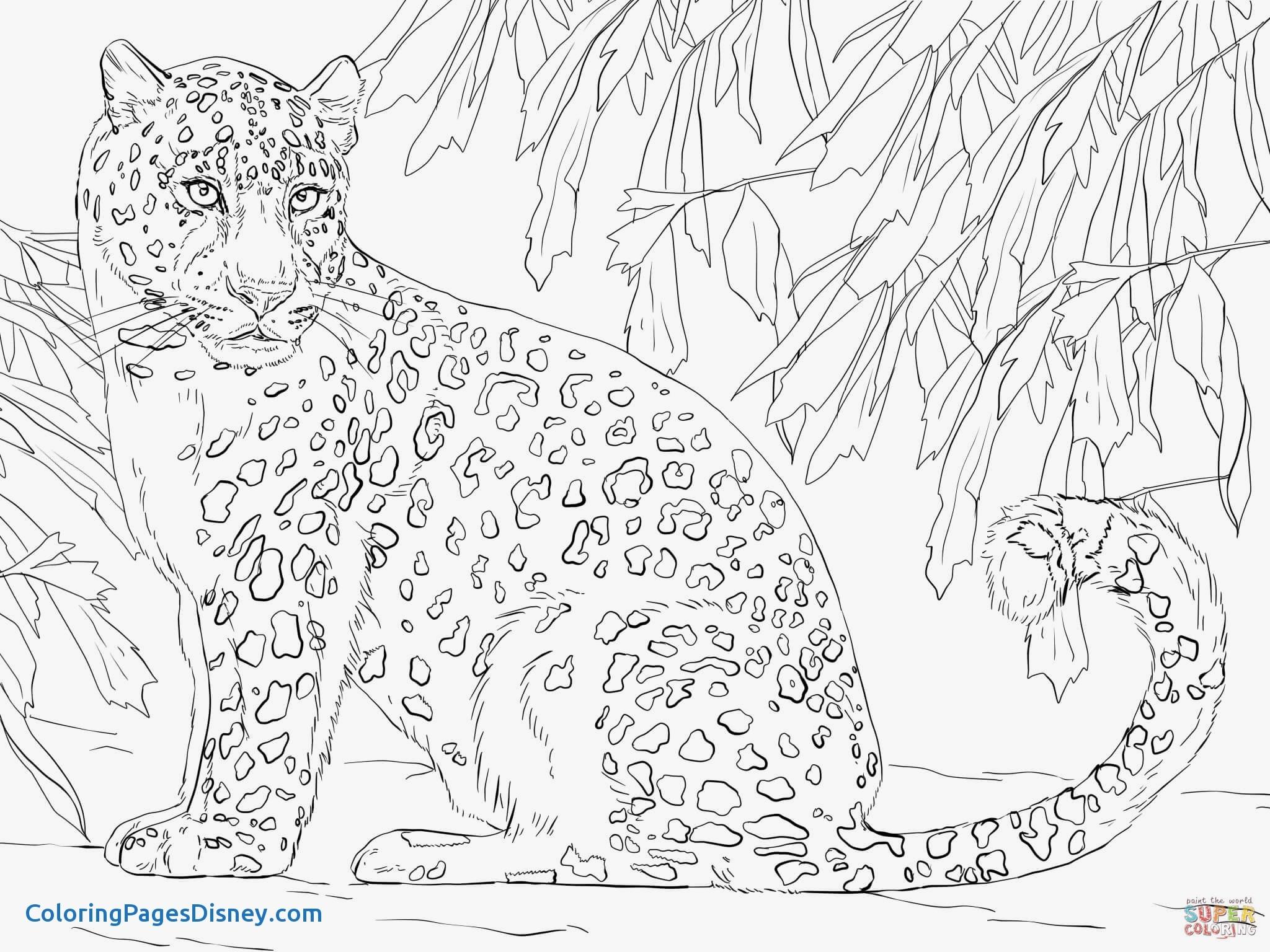 2048x1536 Leopard Coloring Pages Luxury Amur Leopard Coloring Page