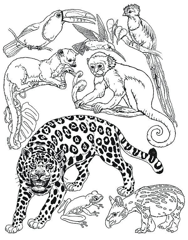 600x764 Amur Leopard Coloring Pages Drawn Leopard Safari Animal Coloring