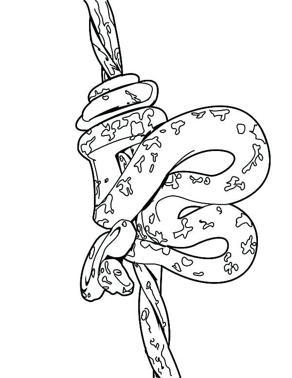 600x776 Anaconda Coloring Pages Boa Constrictor Coloring Page Anaconda