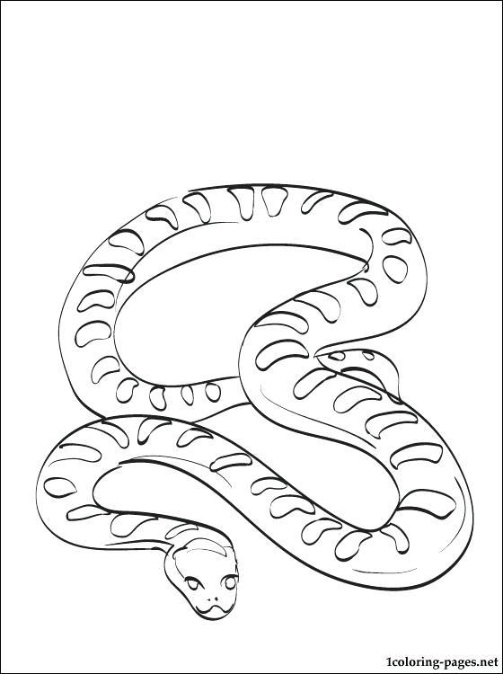 560x750 Anaconda Coloring Pages