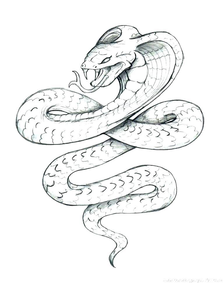 765x969 Boa Constrictor Coloring Page Anaconda Coloring Page Anaconda