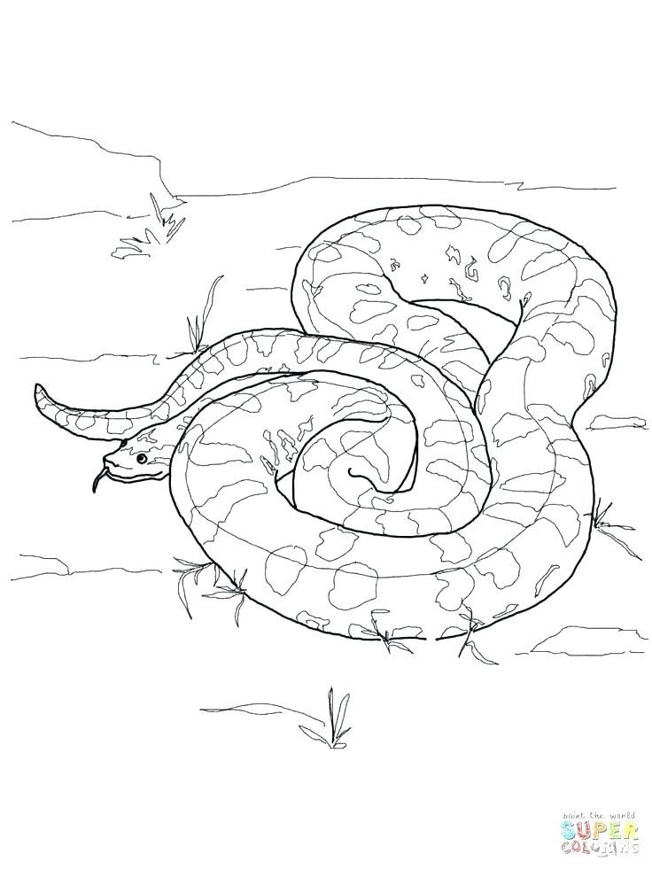 736x981 Boa Constrictor Coloring Page Anaconda Coloring Pages Super Y Boa