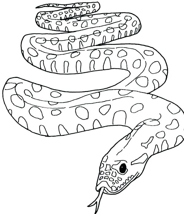 600x698 Coloring Page Snake Coloring Pages Snake Anaconda Coloring Pages