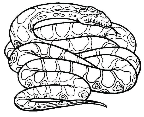 600x488 Snake Coloring Page And Snake Coloring Page Snake Color Page