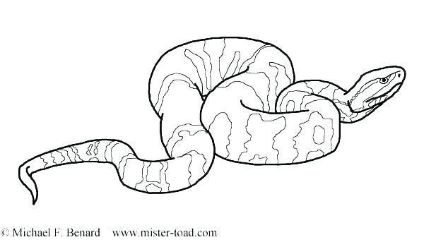 600x343 Snake Snake Anaconda Snake Coloring Pages